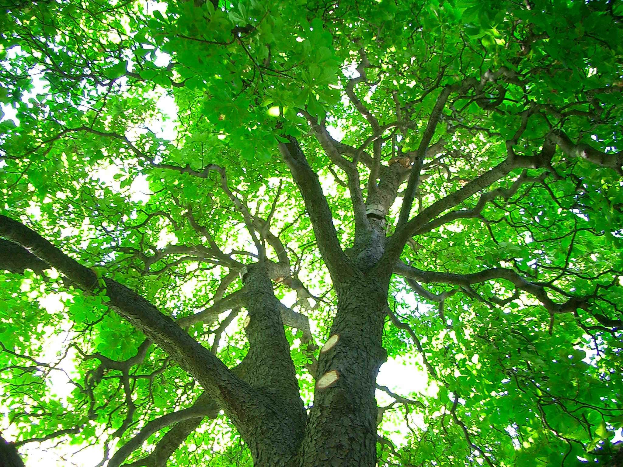 Dove acquistare arbusti e alberi da giardino for Vivaio alberi da giardino